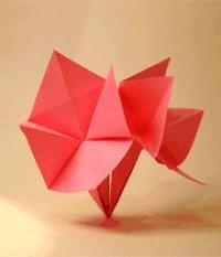 شکوفه ی کاغذی