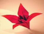زنبق کاغذی